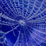 Spinnennetz Netzwerksymbol