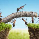 Symbol Ameisen bauen gemeinsam Brücke