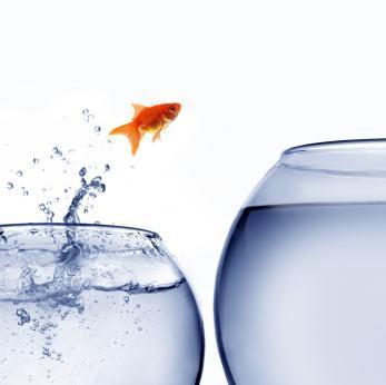 Symbol berufliche Entwickung - Fisch vergrößert sein Umfeld